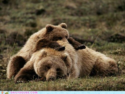 acting like animals amazed baby bear bears cub do want expert grizzly bear grizzly bears massage massaging masseuse relaxed relaxing - 4719411456