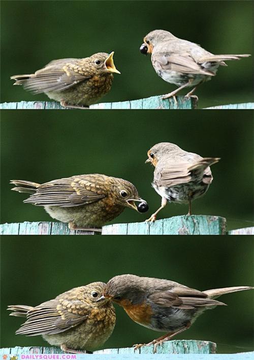 berry bird birds compromise nom noms one pun sharing solution splitting - 4719536896