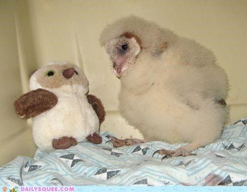 baby,brothers,chick,filial love,friends,friendship,Owl,stuffed animal