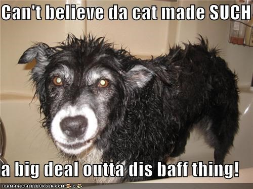 bath believe Big Deal border collie cant cat not so bad surprised