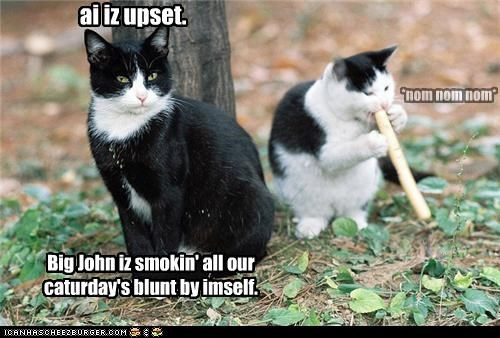 ai iz upset. Big John iz smokin' all our caturday's blunt by imself. *nom nom nom*