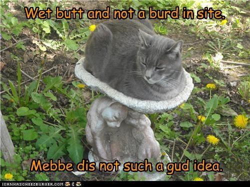 bad idea bird birdbath butt caption captioned cat not regret sight sitting waiting wet