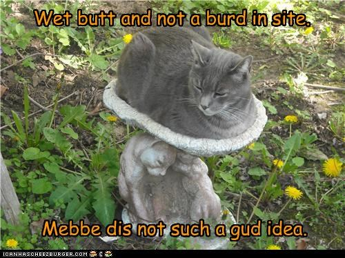 bad idea bird birdbath butt caption captioned cat not regret sight sitting waiting wet - 4720576768