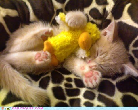 asleep,baby,cat,cuddling,kitten,mittens,reader squees,sleeping,spoiled,stuffed animal,toy
