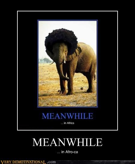 awesome,elephant,fro,hilarious,Meanwhile