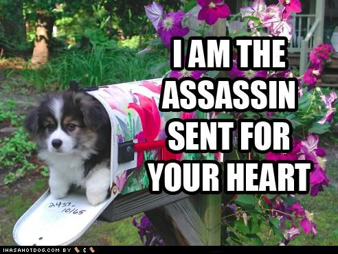 assassin flowers mailbox mutt puppy whatbreed - 4722371328