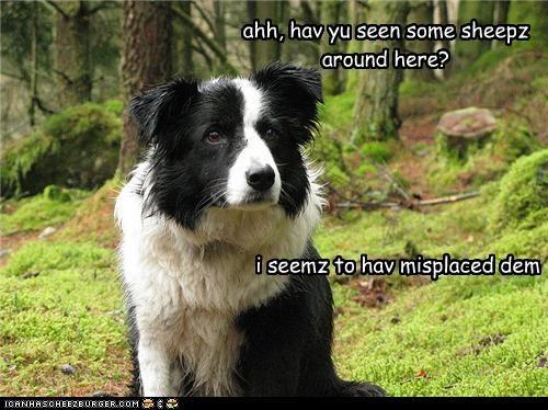 ahh, hav yu seen some sheepz around here? i seemz to hav misplaced dem