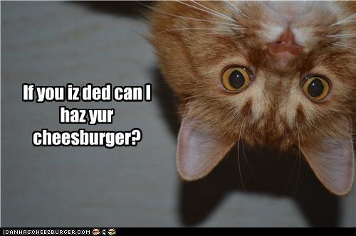 Cheezburger Image 4722558464