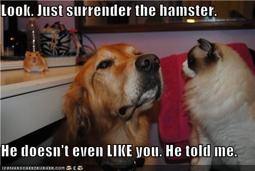 Look. Just surrender the hamster. He doesn't even LIKE you. He told me.