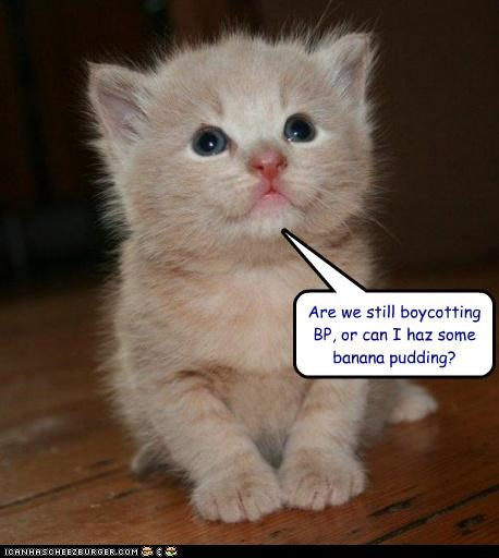 abbreviation acronym banana bp captioned cat do want kitten pudding question - 4723141888