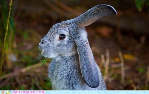 acting like animals annoyed confused ears frequency hare listening question radio static switching - 4723253760