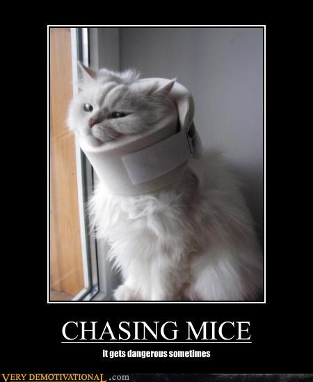 CHASING MICE it gets dangerous sometimes