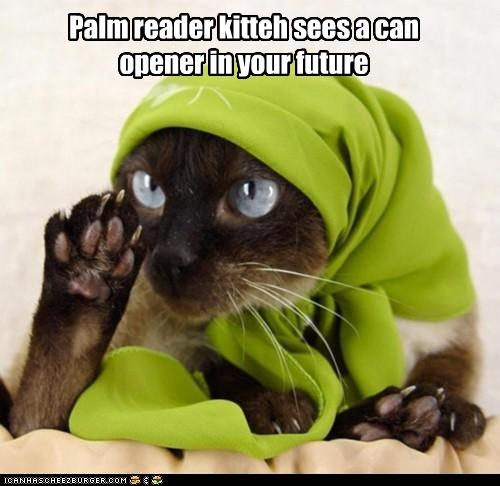 can opener,caption,captioned,cat,fortune teller,future,palm reader,sees,shawl,siamese