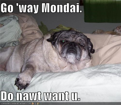 asleep do not want go away grumpy monday pug request sleepy tired