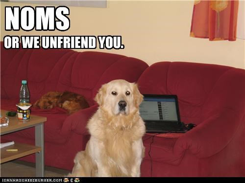 conditions,demand,do want,facebook,golden retriever,noms,terms,threat,unfriend