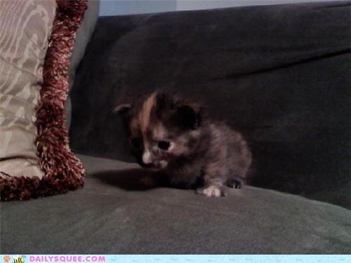 attempting baby cat first step kitten reader squees steps trying walking - 4725331968
