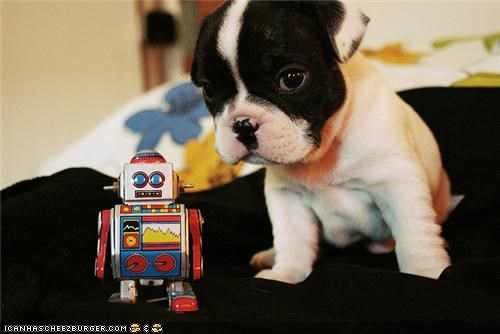 bed,blanket,cyoot puppeh ob teh day,french bulldogs,puppy,robot,toy