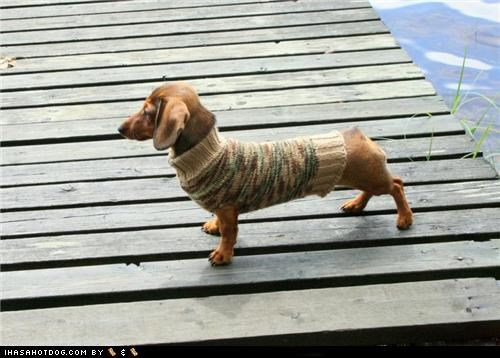 dachshund,dock,gaze,sweater,wiener dog,wood