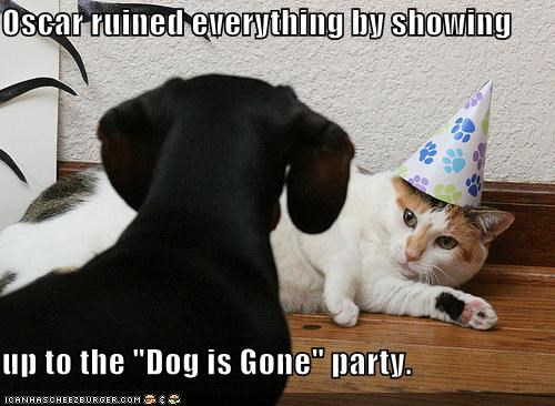 cat,dachshund,everything,gone,Party,party hat,ruined