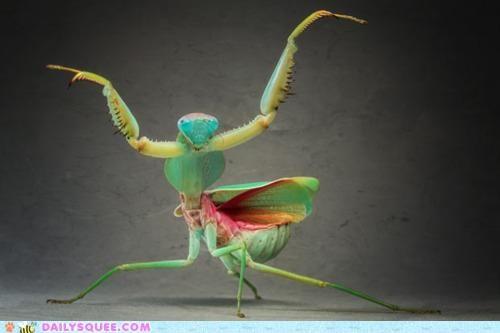 acting like animals lyrics praying mantis reference song Songs title - 4726787072