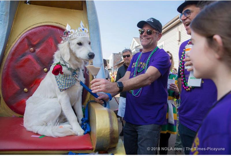 Mardi Gras cute parade funny barkus barkus - 4726789