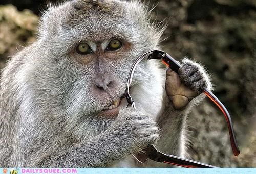 acting like animals actors biting doing it wrong FAIL misinterpretation monkey nomming sunglasses - 4726804480