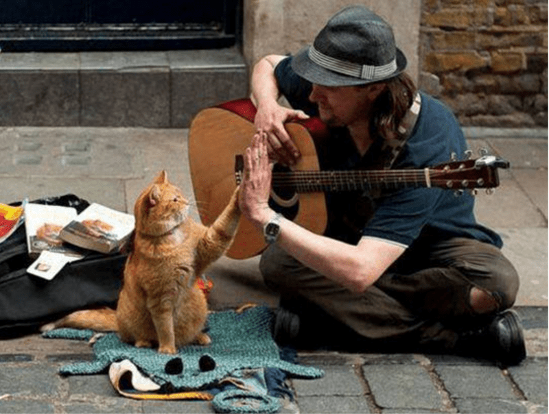 homeless cute story Cats - 4727301