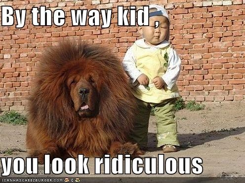 by the way,child,human,look,ridiculous,tibetan mastiff,toddler