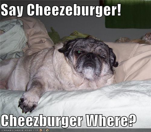 Cheezburger Image 4727575296