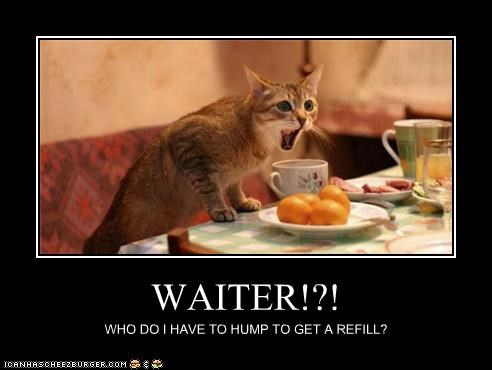 WAITER!?! WHO DO I HAVE TO HUMP TO GET A REFILL?