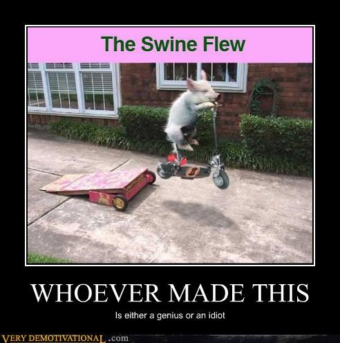 flew,genius,idiots,pun,swine