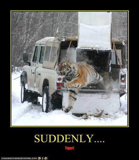 SUDDENLY.... Tiger!