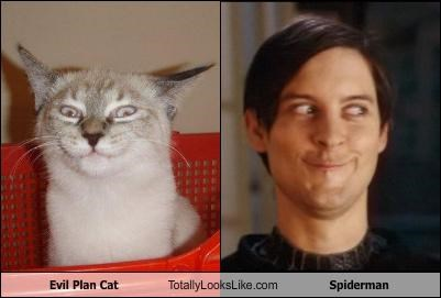 actors,animals,Cats,expressions,Spider-Man,tobey maguire