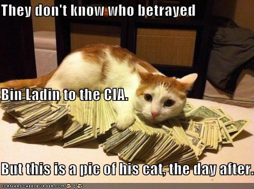 betrayed,bribe,bribery,caption,captioned,cat,cia,day after,found,money,Osama Bin Laden,picture,tabby