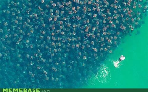 alone fish forever alone sea - 4729029120