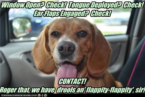 Window Open? Check! Tongue Deployed? Check! Ear Flaps Engaged? Check! CONTACT! Roger that, we have drools an' flappity-flappity', sir!