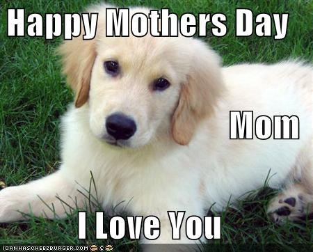 golden retriever happy holiday i love you mothers day puppy sweet touching - 4729697024