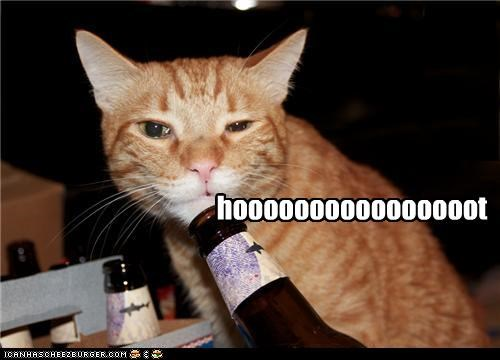 blowing,bottle,caption,captioned,cat,hoot,sound,tabby