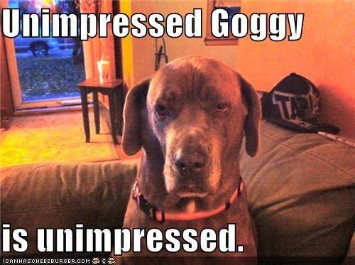 Unimpressed Goggy is unimpressed.