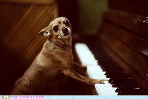 acting like animals,chihuahua,determined,dogs,notes,piano,playing,practicing,scale,singing