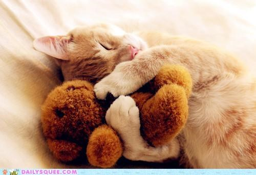asleep attitude cat changing cuddles cuddling do want FRIDAY friends friendship homebody night night owl sleeping staying in stuffed animal - 4730501888