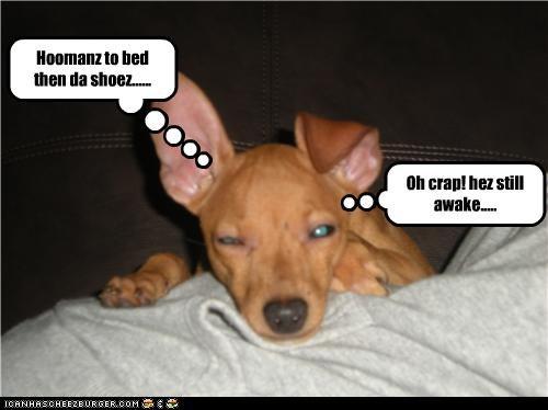 Oh crap! hez still awake..... Hoomanz to bed then da shoez......