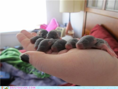 adorable,amazing,Babies,baby,lined up,names,naming,rat,rats,reader squees,roll call,tiny