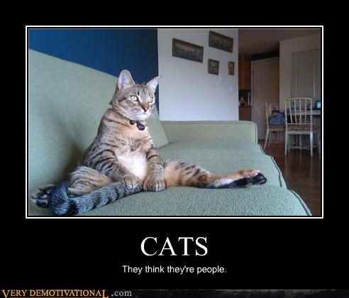 animals Cats hilarious people - 4731358208