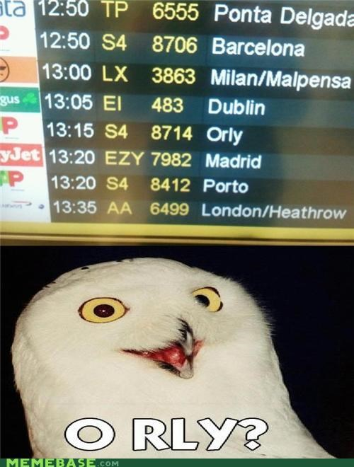 airplane,animemes,madrid,Memes,o rly,Owl