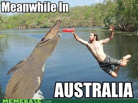 alligator,australia,frisbee,Meanwhile,Memes,wat