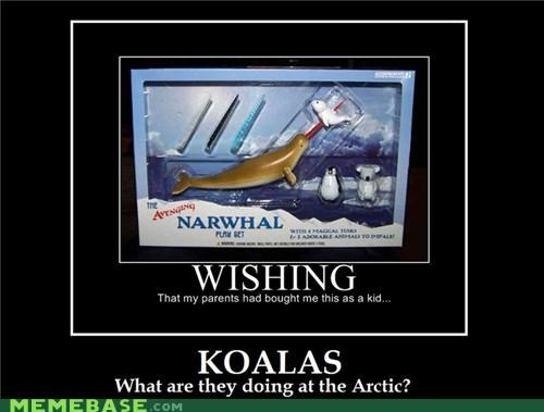 arctic,koalas,narwhal,Pure Awesome