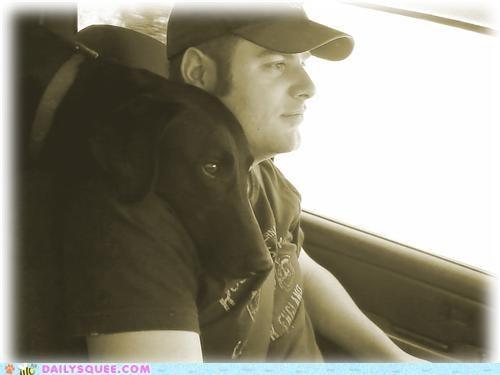 daddy jealous labrador labrador retriever love nose perching reader squees resting shoulder - 4731770624