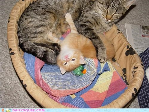cat,Cats,child,cuddling,kitten,mother,mothers day,proud,raising,reader squees,sleeping,son,tired