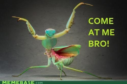 insect Memes ninjas praying mantis world - 4732232192
